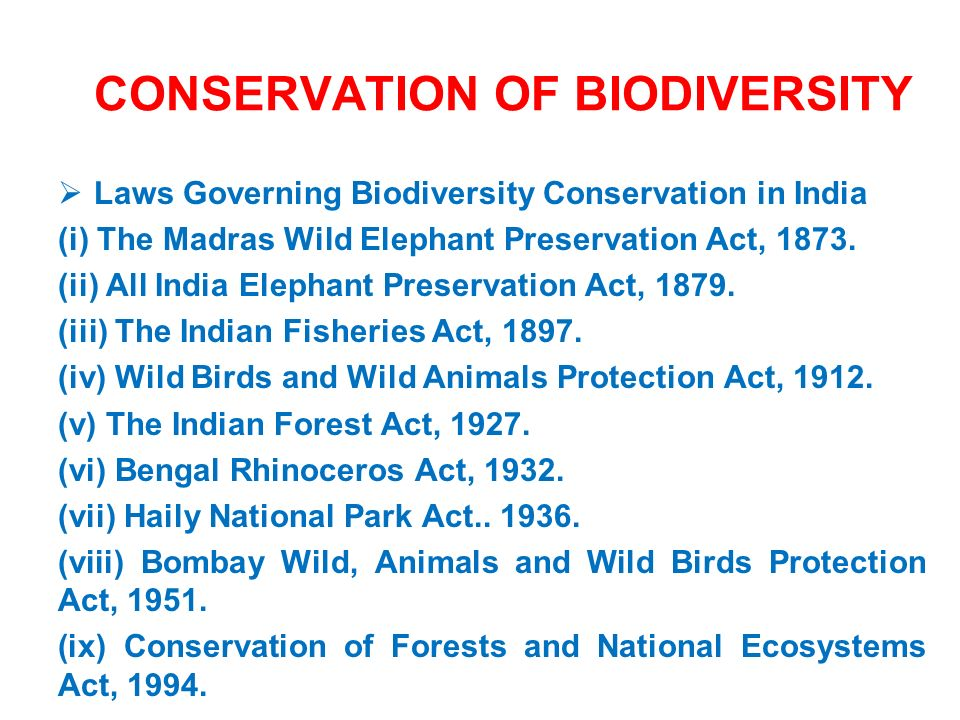 animal biodiversity and conservation pdf