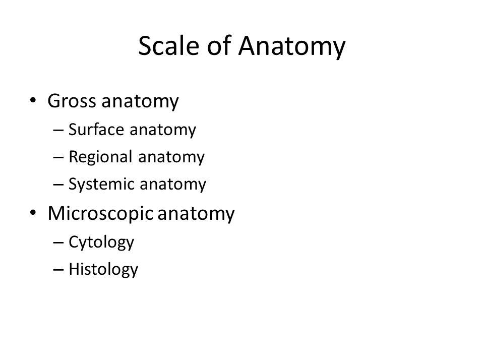 Contemporary Definition Of Microscopic Anatomy Embellishment ...