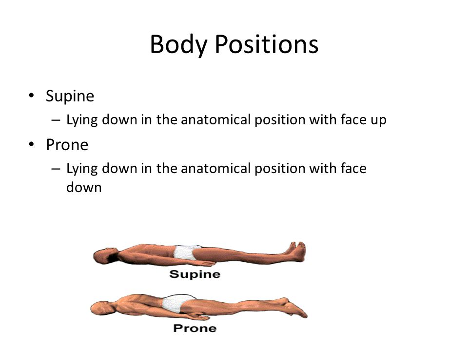 Supine definition anatomy
