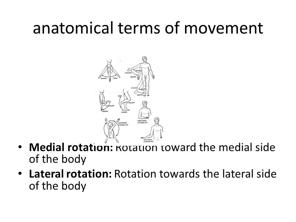 Anatomy terms of movement