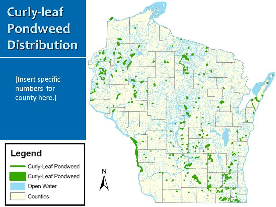 Curly-leaf Pondweed Distribution