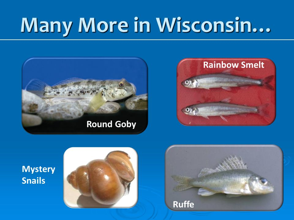Many More in Wisconsin…