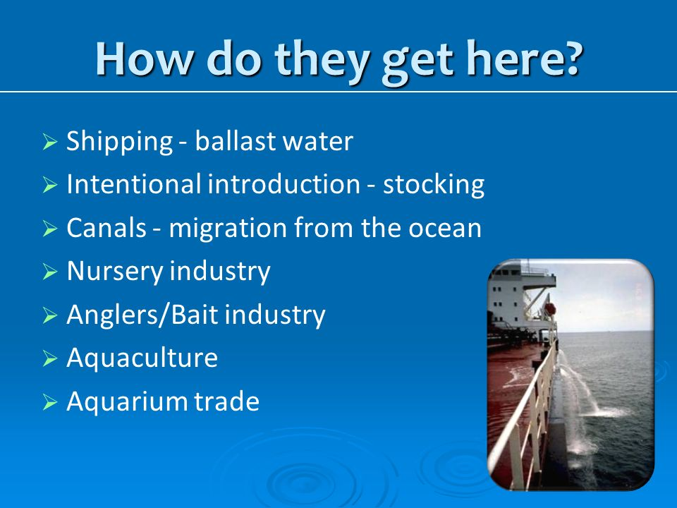 How do they get here Shipping - ballast water