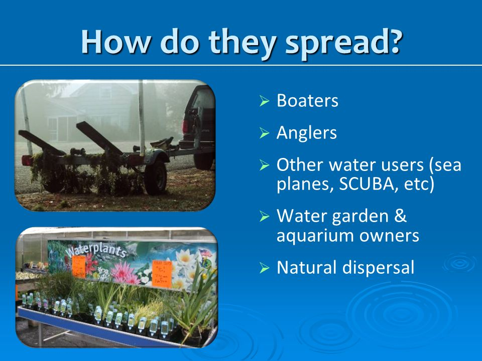 How do they spread Boaters Anglers