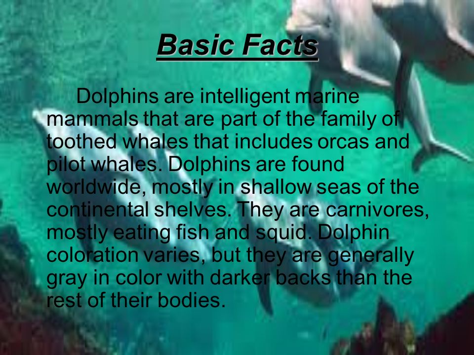 basic facts about dolphins Dolphins are really smart aquatic mammals and so it's quite interesting to learn some rare facts about dolphins for kids what makes them so interesting and set them apart from other marine animals is their unique behavior.