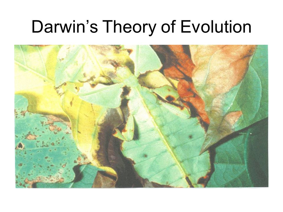 darwins evolutionary theory New book brings powerful case against darwin  challenges darwin's theory of evolution in  darwin's concept of evolutionary adaptation through natural.