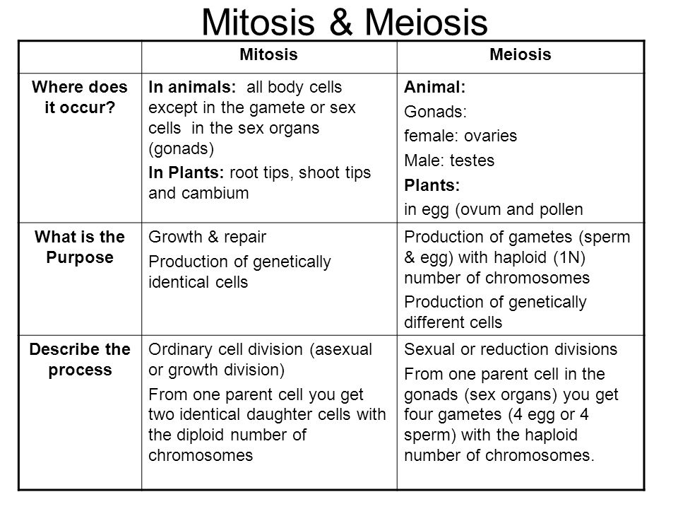 Mitosis Meiosis Mitosis Meiosis Where Does It Occur Ppt Video