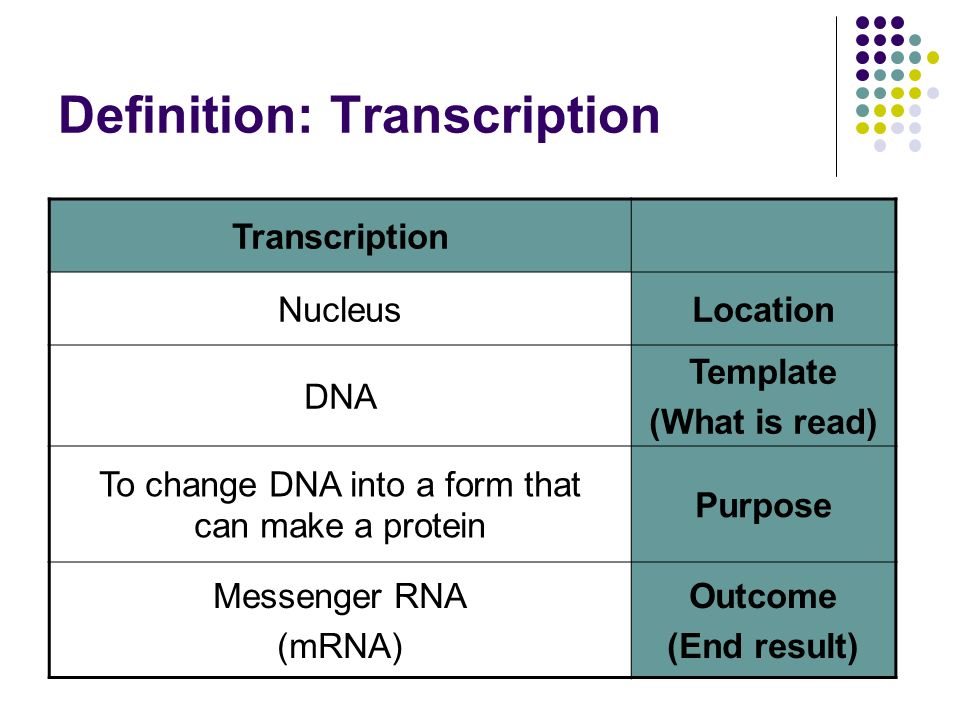 transcription  u0026 translation