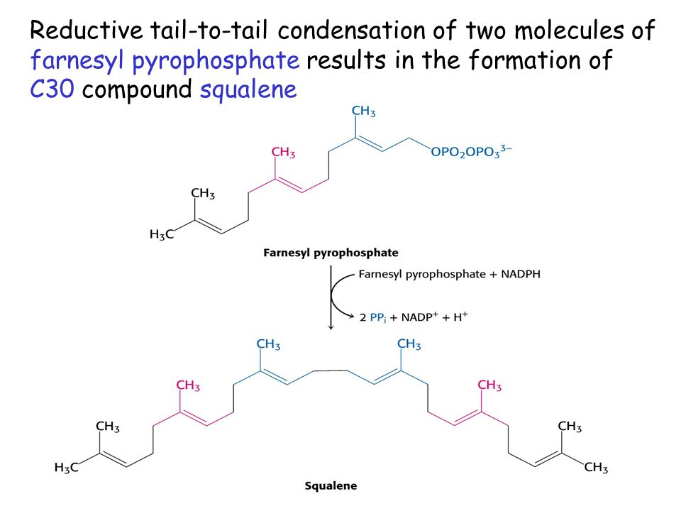 Reductive tail-to-tail condensation of two molecules of farnesyl pyrophosphate results in the formation of C30 compound squalene