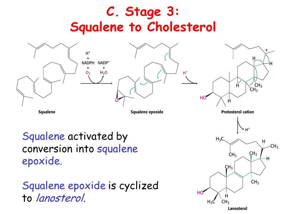 Squalene to Cholesterol
