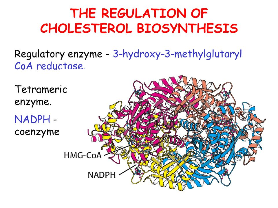 THE REGULATION OF CHOLESTEROL BIOSYNTHESIS