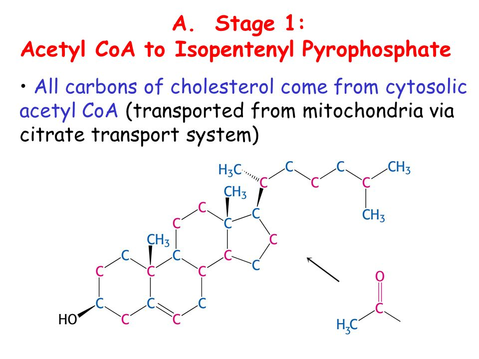 A. Stage 1: Acetyl CoA to Isopentenyl Pyrophosphate