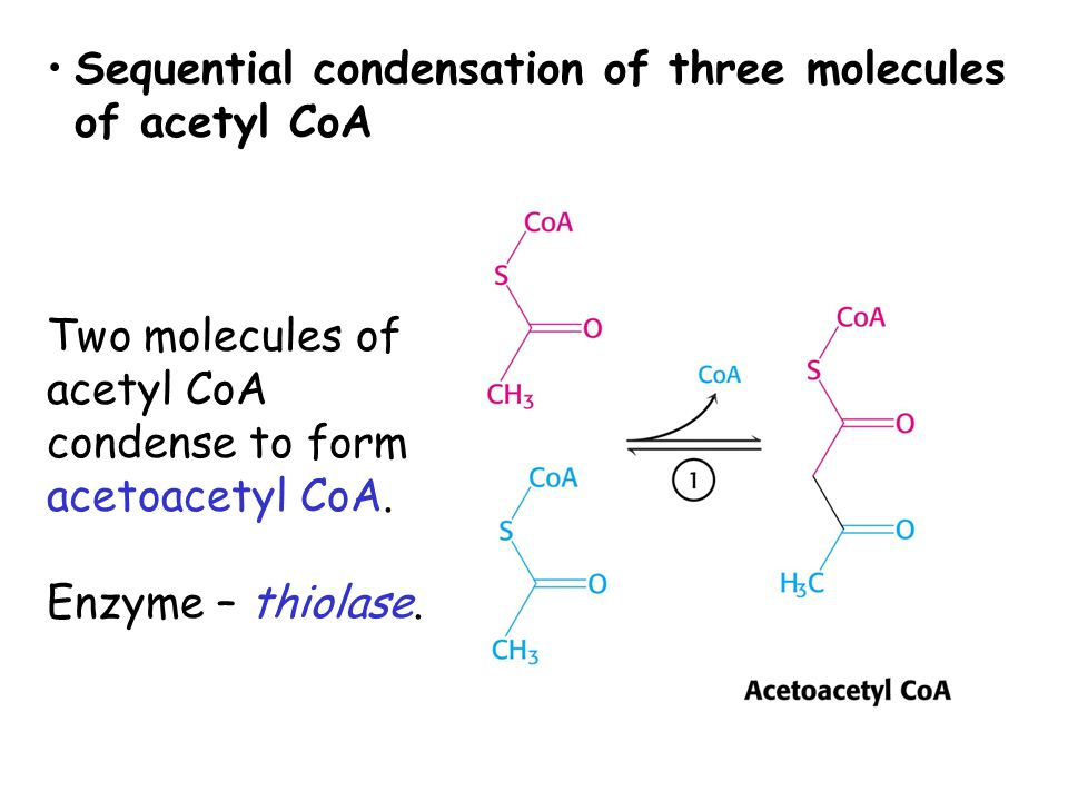 Sequential condensation of three molecules of acetyl CoA