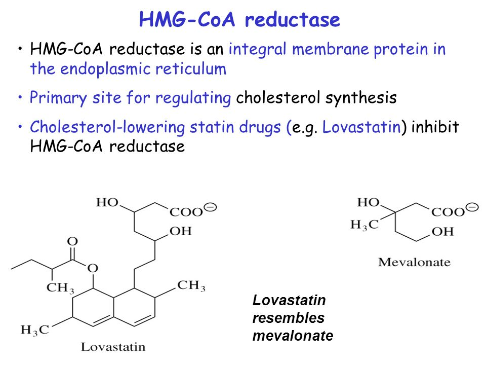 HMG-CoA reductase HMG-CoA reductase is an integral membrane protein in the endoplasmic reticulum. Primary site for regulating cholesterol synthesis.