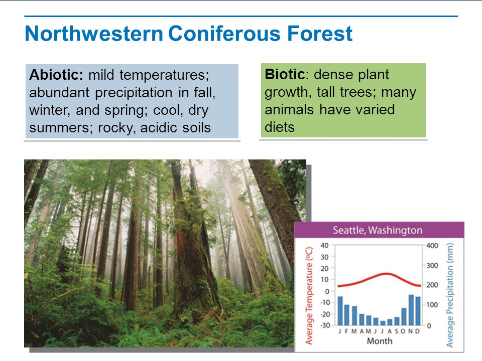 biotic factors of a coniferous forest