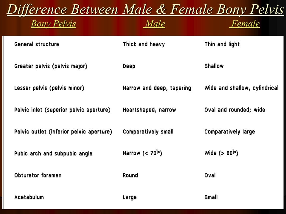 The differences and similarities between males and females