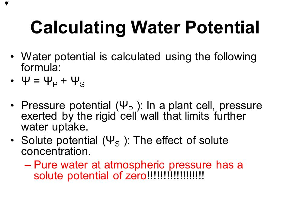 Calculating water potential - ppt download