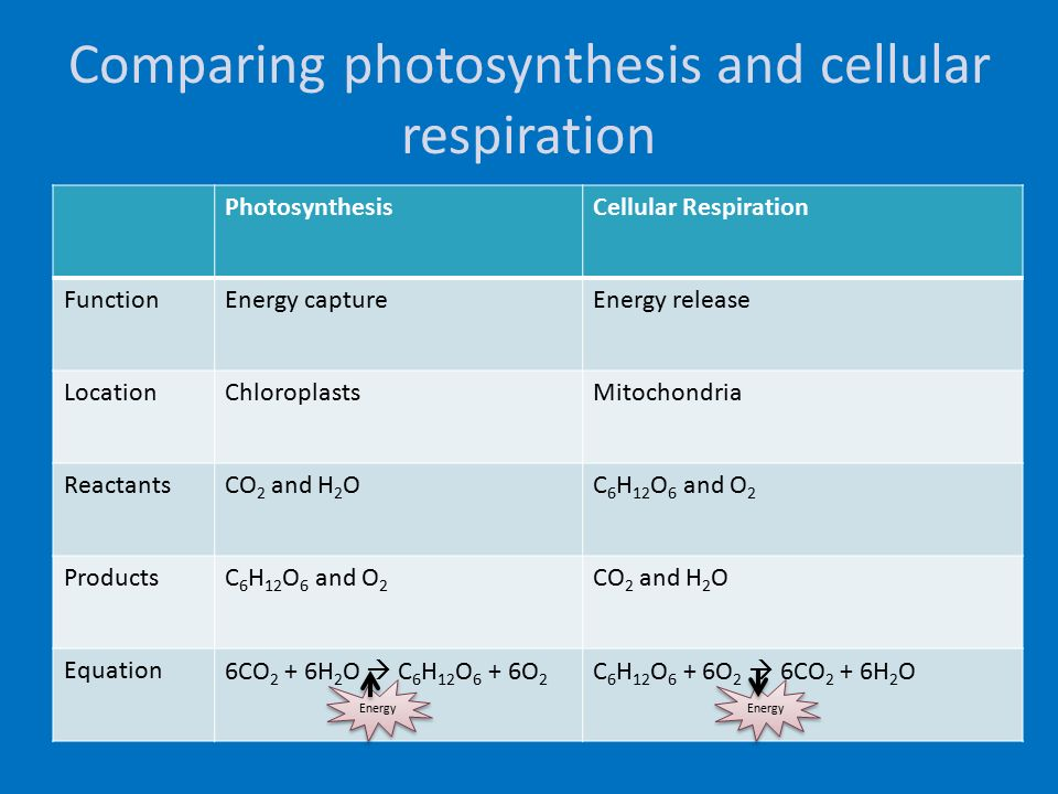 Compare and contrast photosynthesis and cellular respiration?