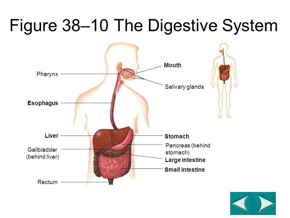 Digestion Copy everything in red. - ppt download