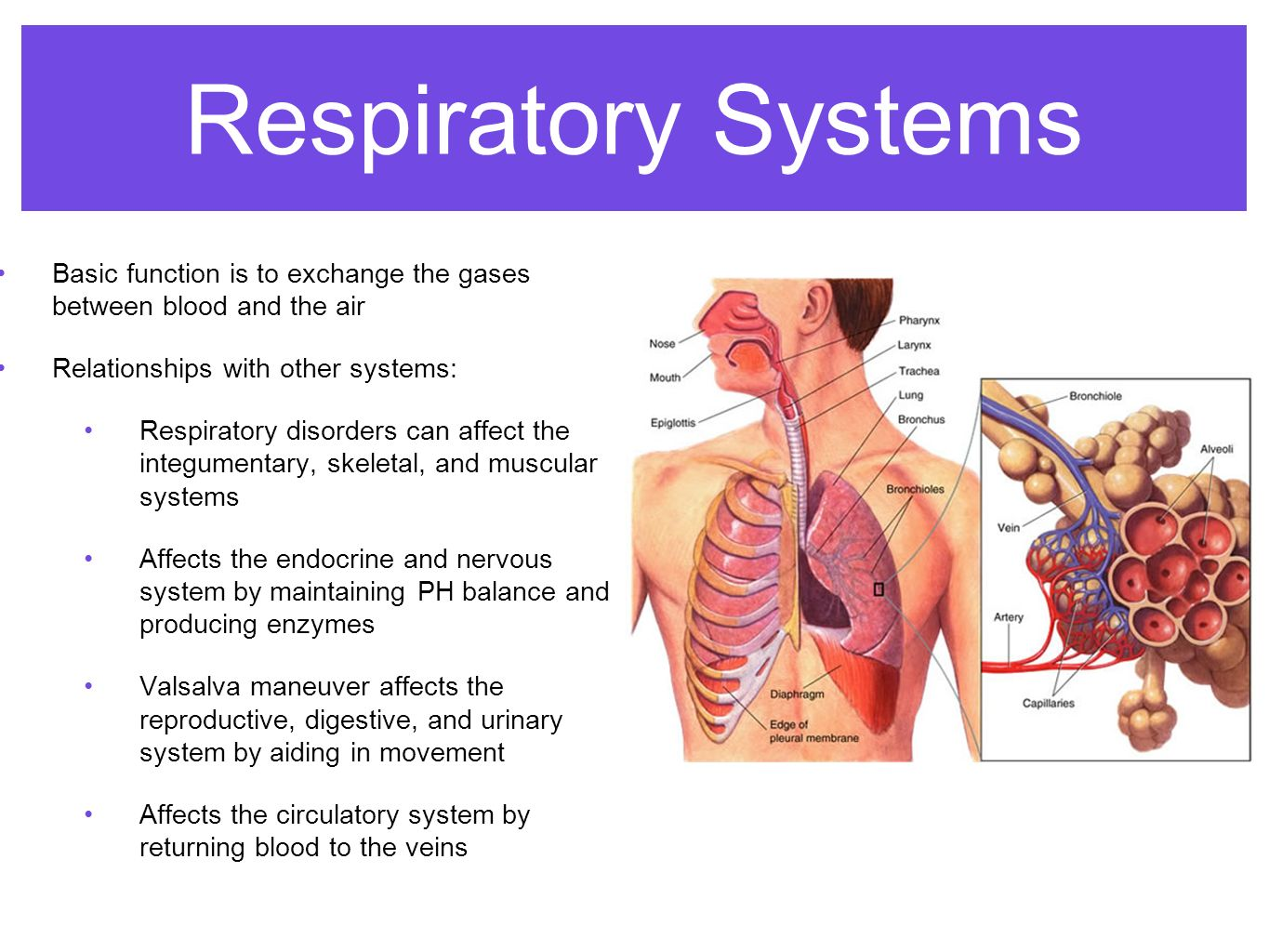 relationship between nervous system and respiratory