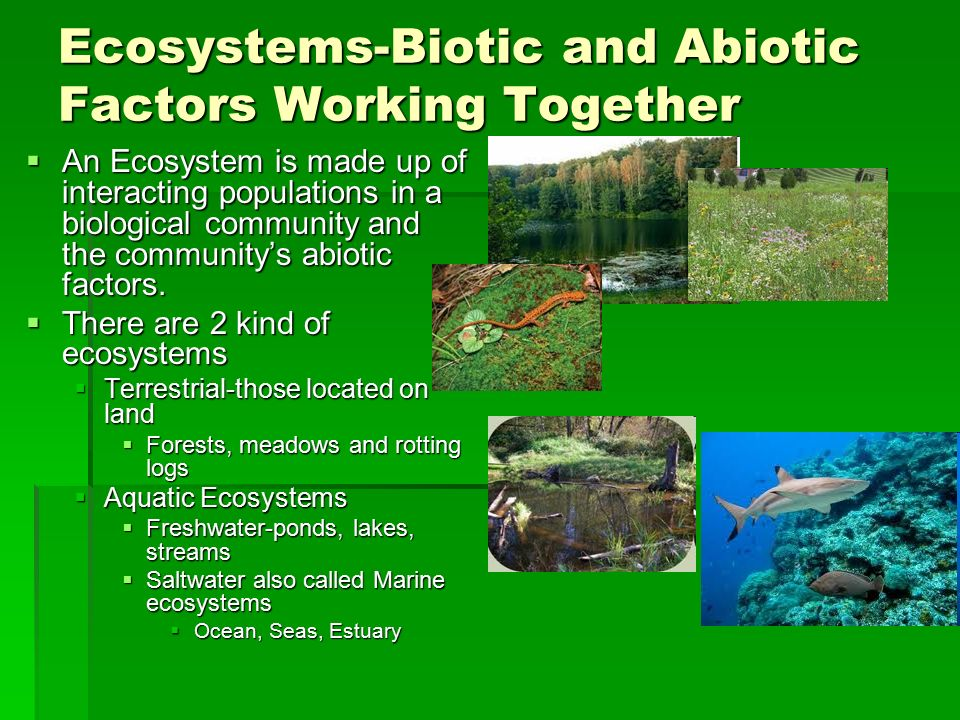 how an ecosystem works together to The oxford dictionary defines an ecosystem as a biological community of interacting organisms and their physical environment in other words, it's a network of plants, animals and microbes, which work together as a unit in a particular area, and the abiotic factors of that area, such as location, climate and soil.