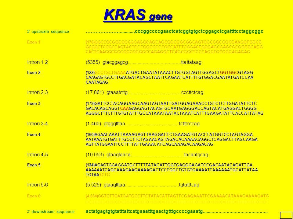 KRAS gene 5 upstream sequence …………………............cccggccccgaactcatcggtgtgctcggagctcgattttcctaggcggc.
