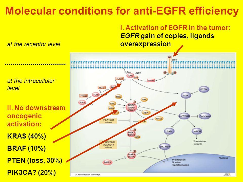 Molecular conditions for anti-EGFR efficiency
