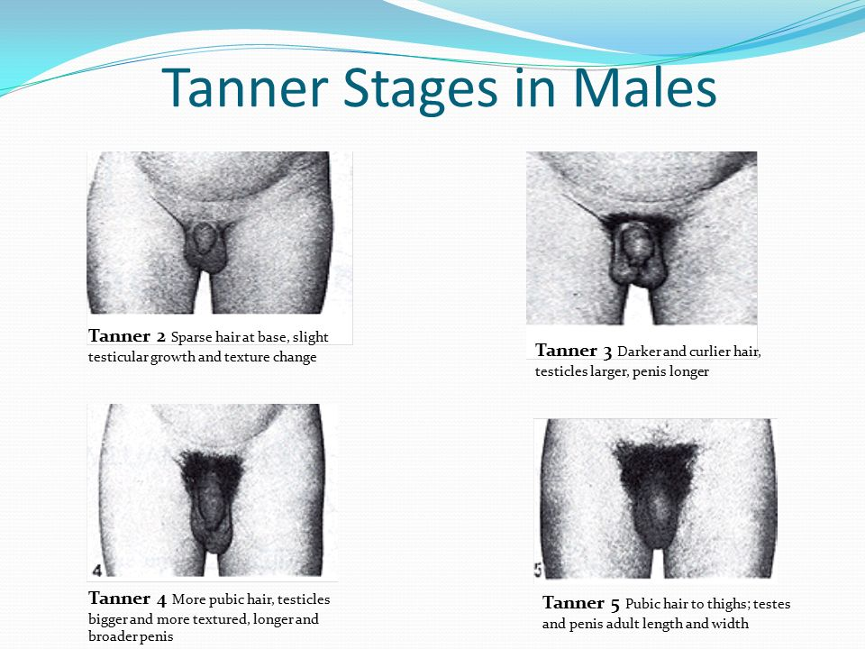 What are the stages in puberty for a mans Penis? Yah
