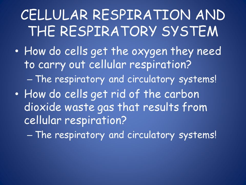 CELLULAR RESPIRATION AND THE RESPIRATORY SYSTEM