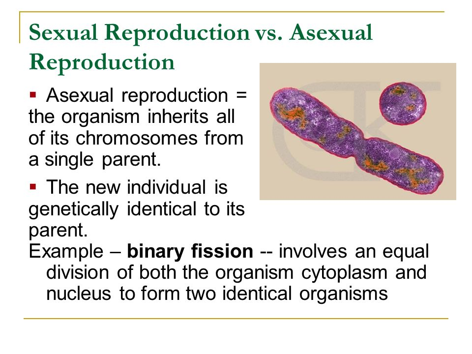 Sexual Reproduction vs. Asexual Reproduction