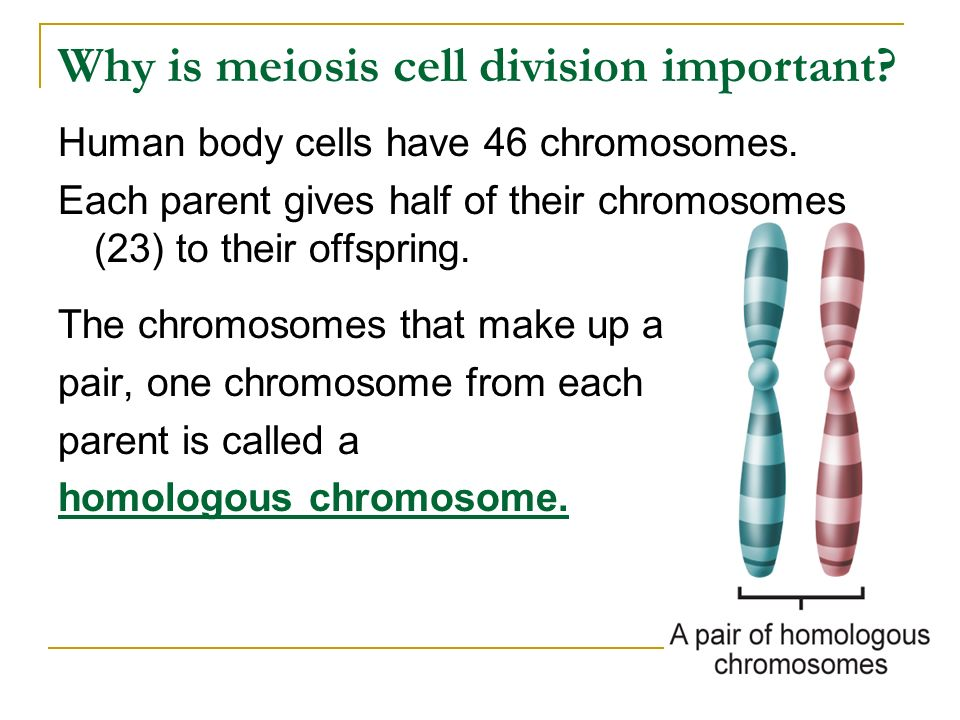 Why is meiosis cell division important