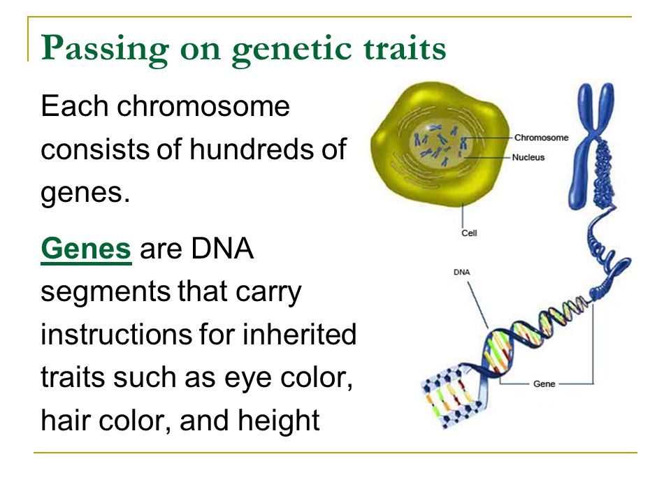 Passing on genetic traits