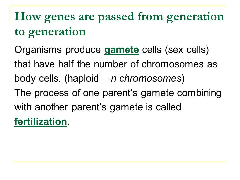 How genes are passed from generation to generation