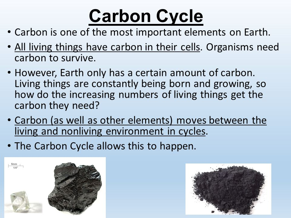 How is the carbon cycle important to life on earth best for Importance of soil wikipedia
