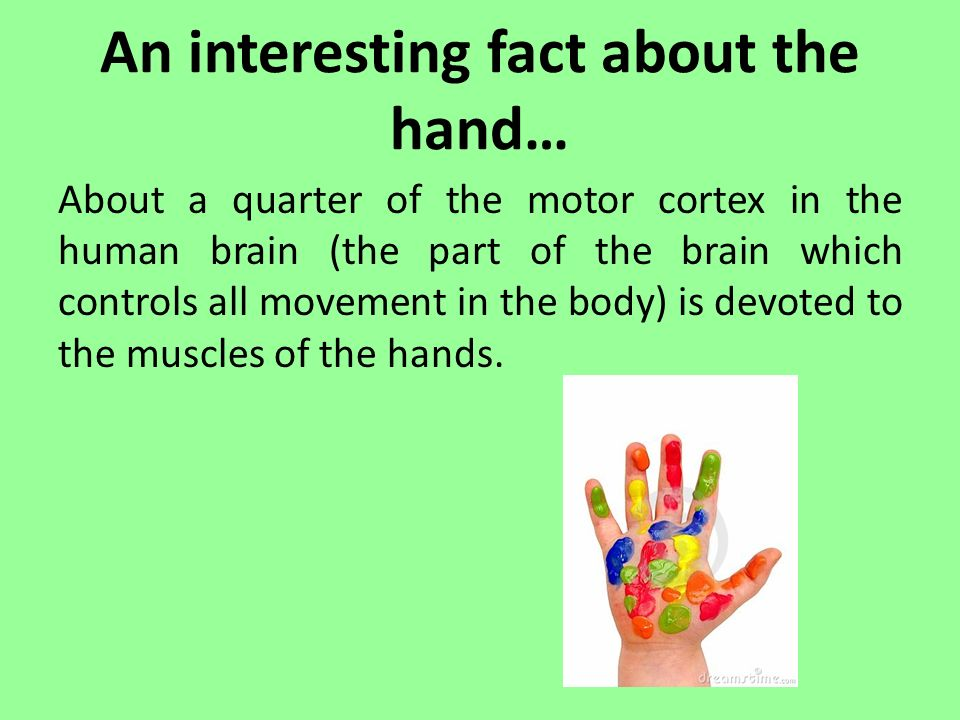 Fine Motor Skills And Handwriting Ppt Video Online Download