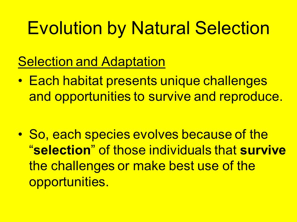 evolution by natural selection Natural selection is not evolution the supposed vehicles of evolution are mutations, natural selection, and other mechanisms that—when combined with that pixie dust of time—allegedly led to the development of all life forms present today.