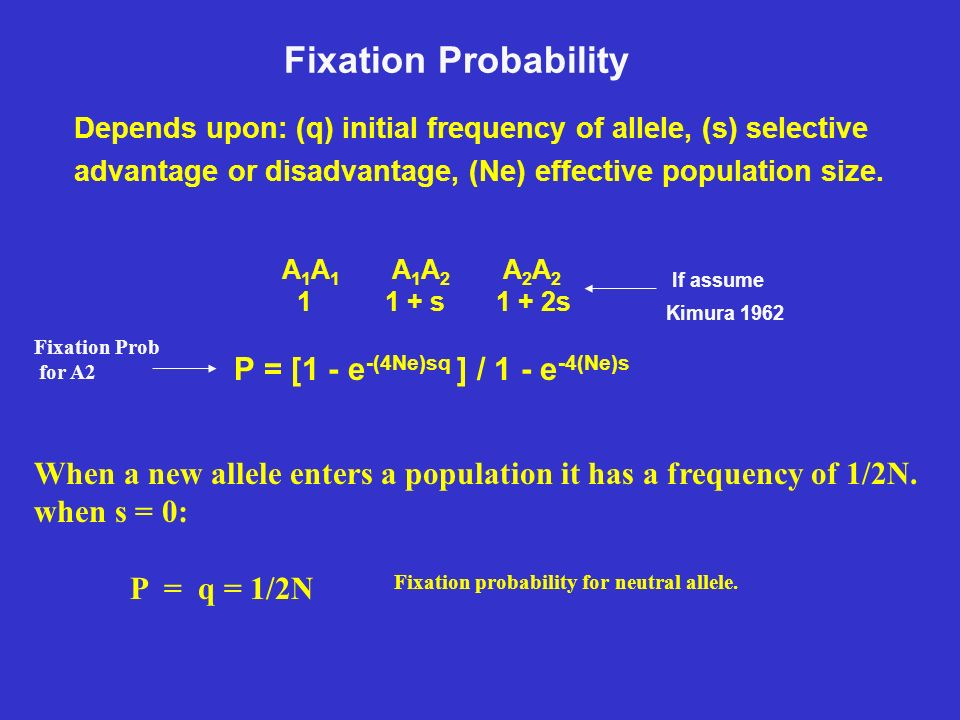 allele and probability 2006-1-31  zestimating allele and haplotype frequencies from genotype data  • θwhere observations have maximum probability zfinding mles is an optimization problem.