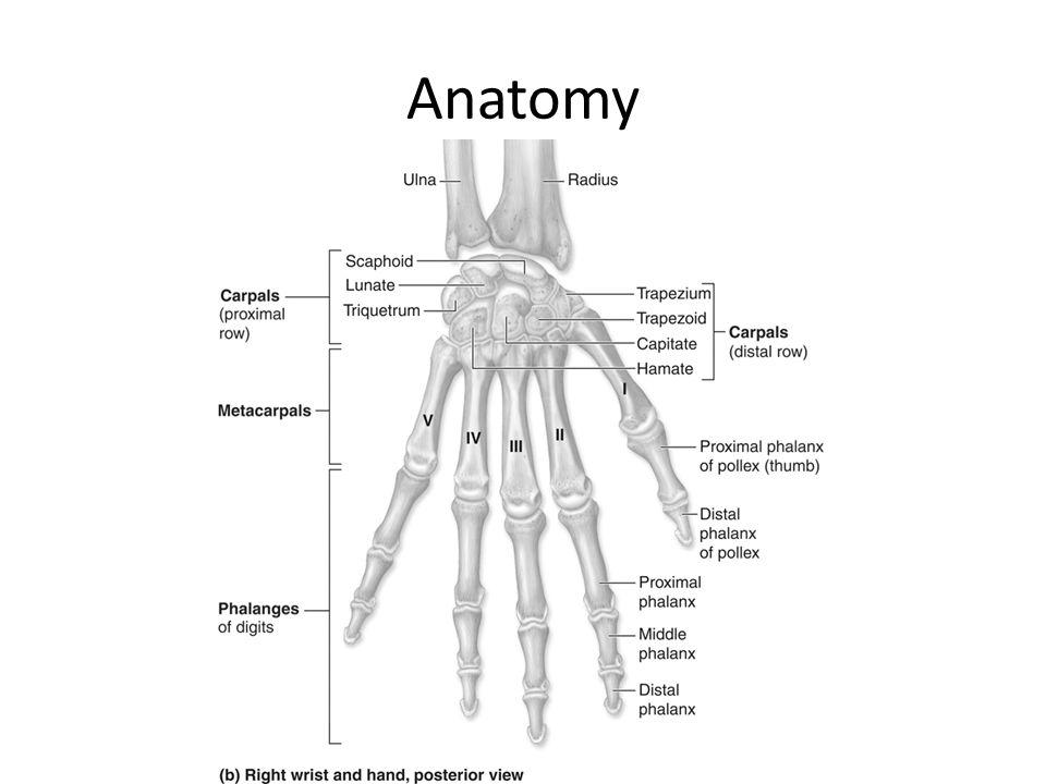 Ungewöhnlich Obere Git Anatomie Ideen - Anatomie Von Menschlichen ...