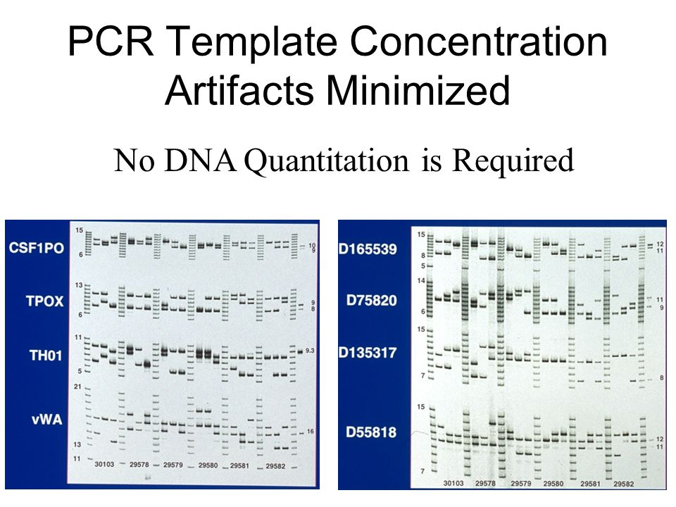 Dna extraction methods ppt video online download for Pcr template amount