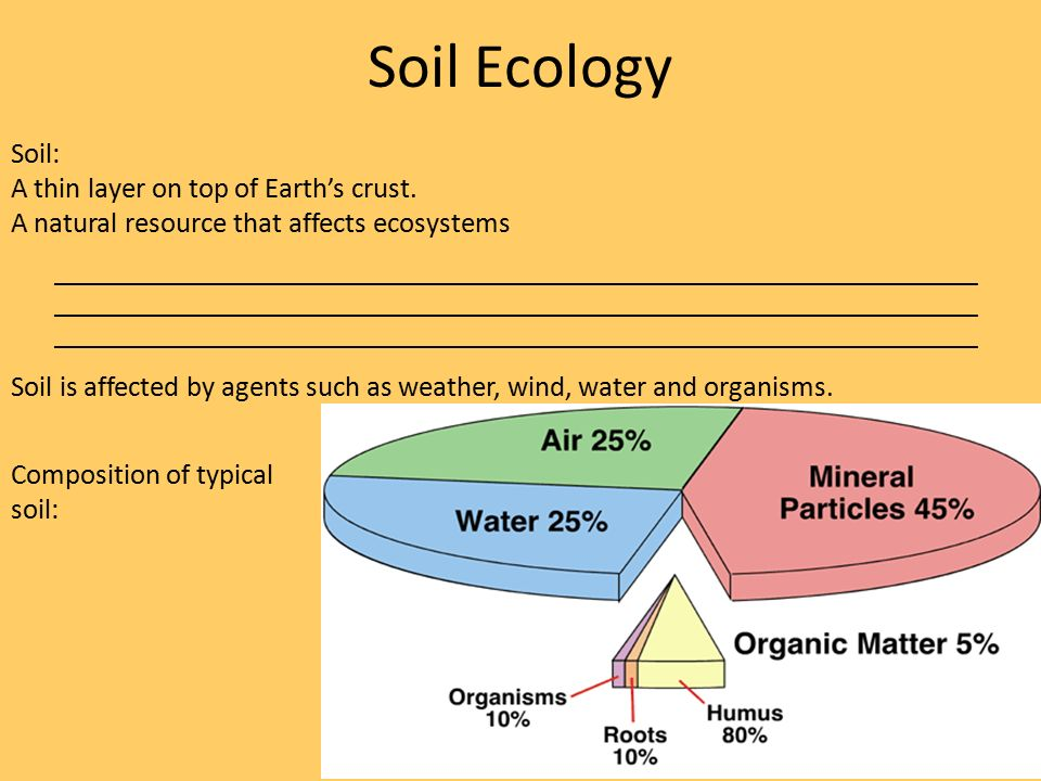 The sector of the economy that seems likely to unravel for Nature and composition of soil
