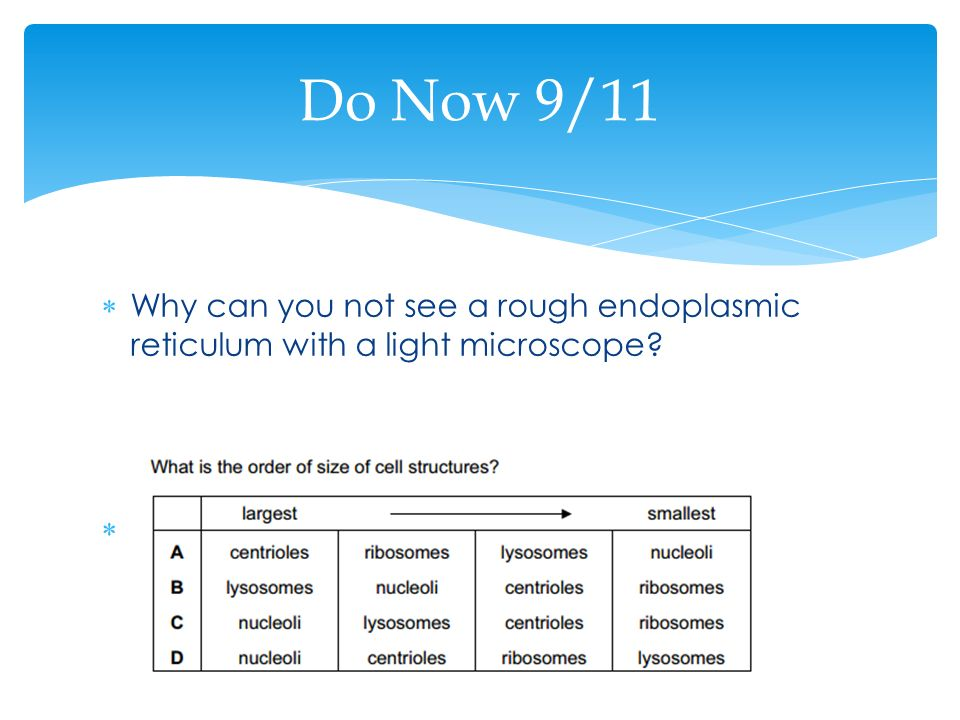 Do Now 9/11 Why can you not see a rough endoplasmic reticulum with a light microscope