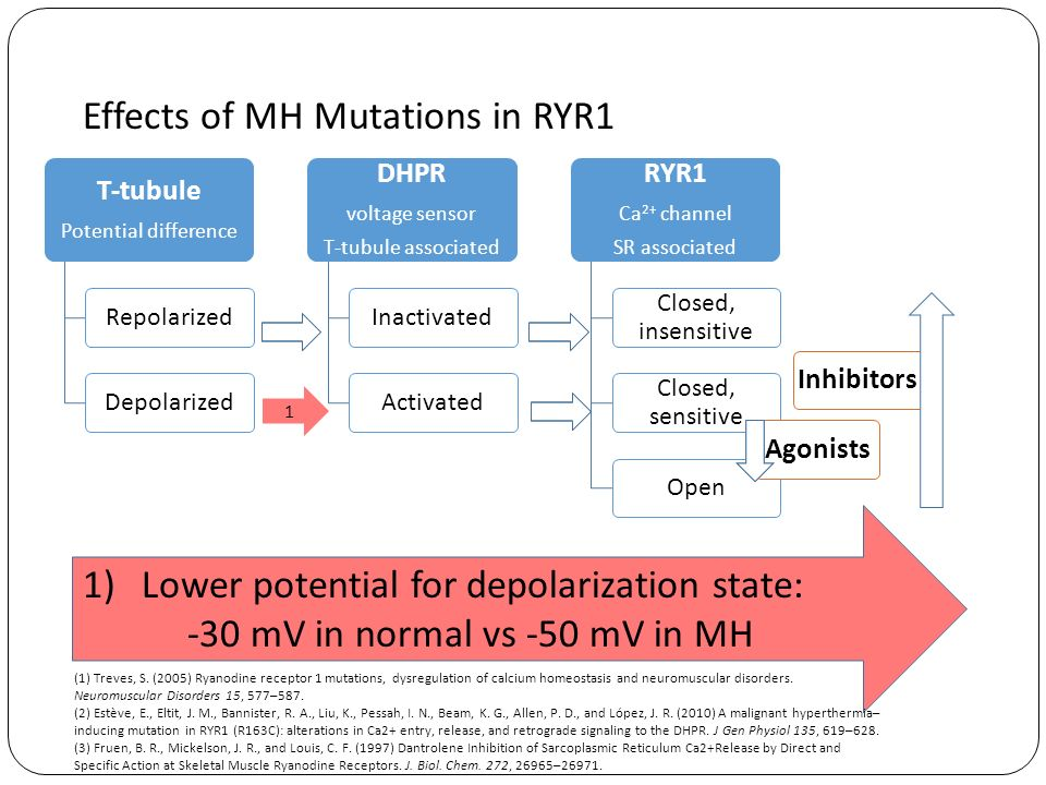 Effects of MH Mutations in RYR1