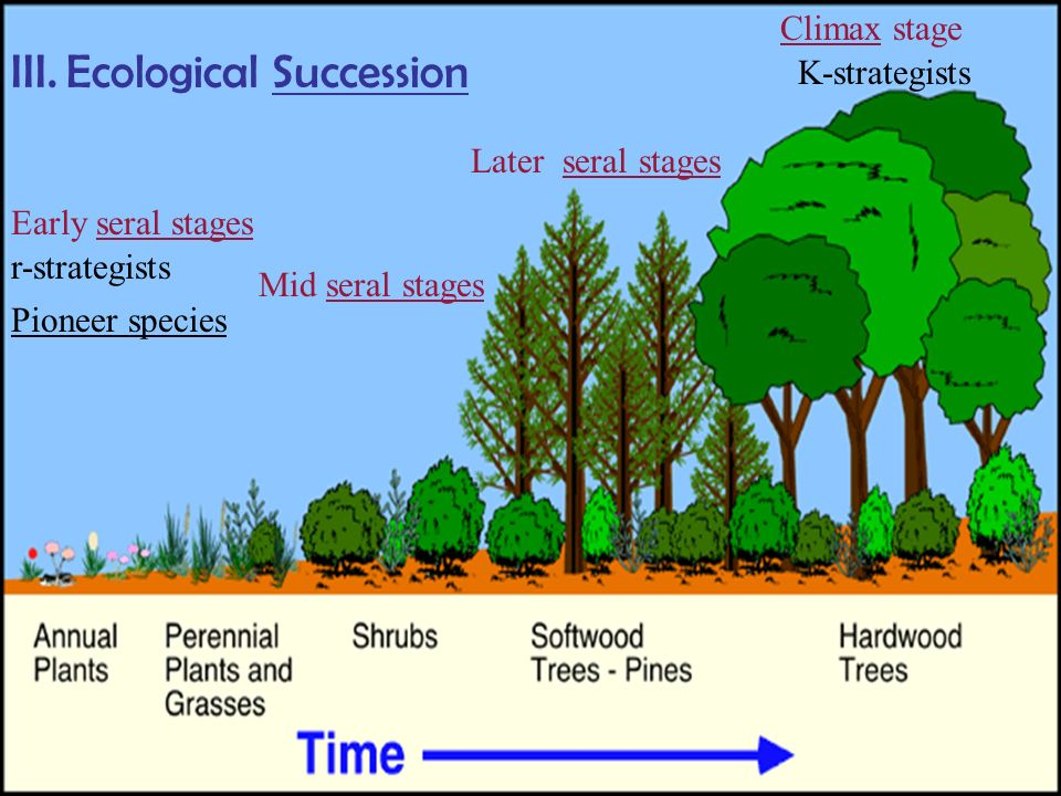 ecosystems ecological succession and climatic climax Ermanii this potential climax species remains scattered on rock terraces and  elevated  illustration of ecosystem response to changing climate in this part.