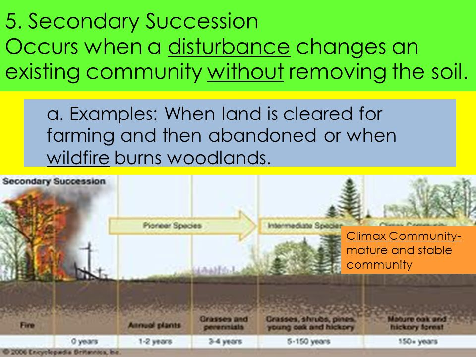Food Web ppt download – Primary and Secondary Succession Worksheet