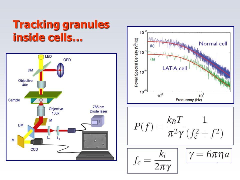 Tracking granules inside cells…