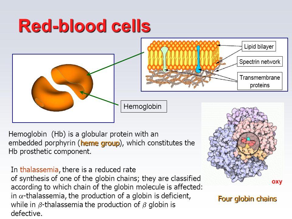 Red-blood cells Soluzione viscosa di emoglobina Hemoglobin