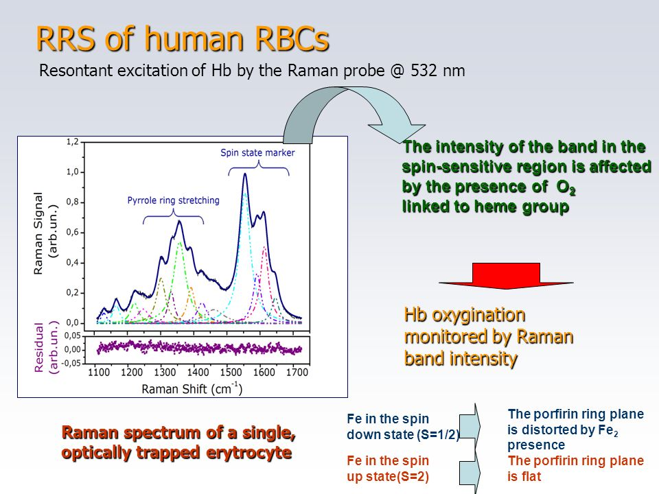 RRS of human RBCs Hb oxygination monitored by Raman band intensity