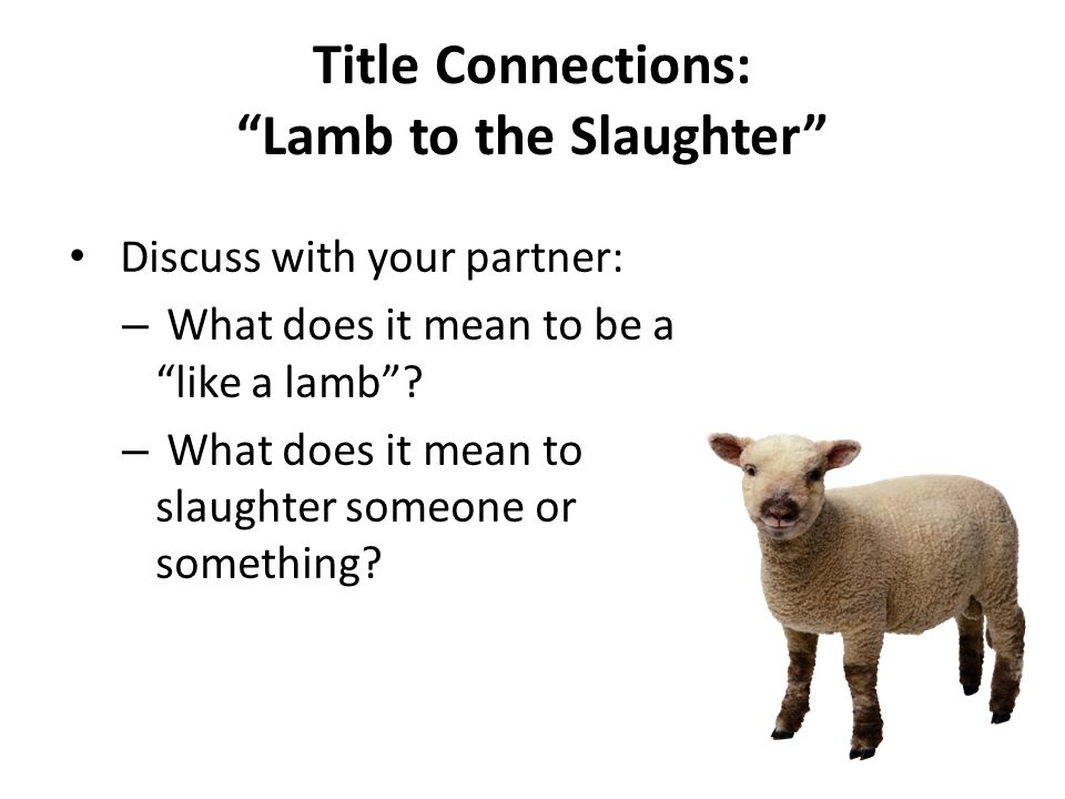 lamb to the slaughter video
