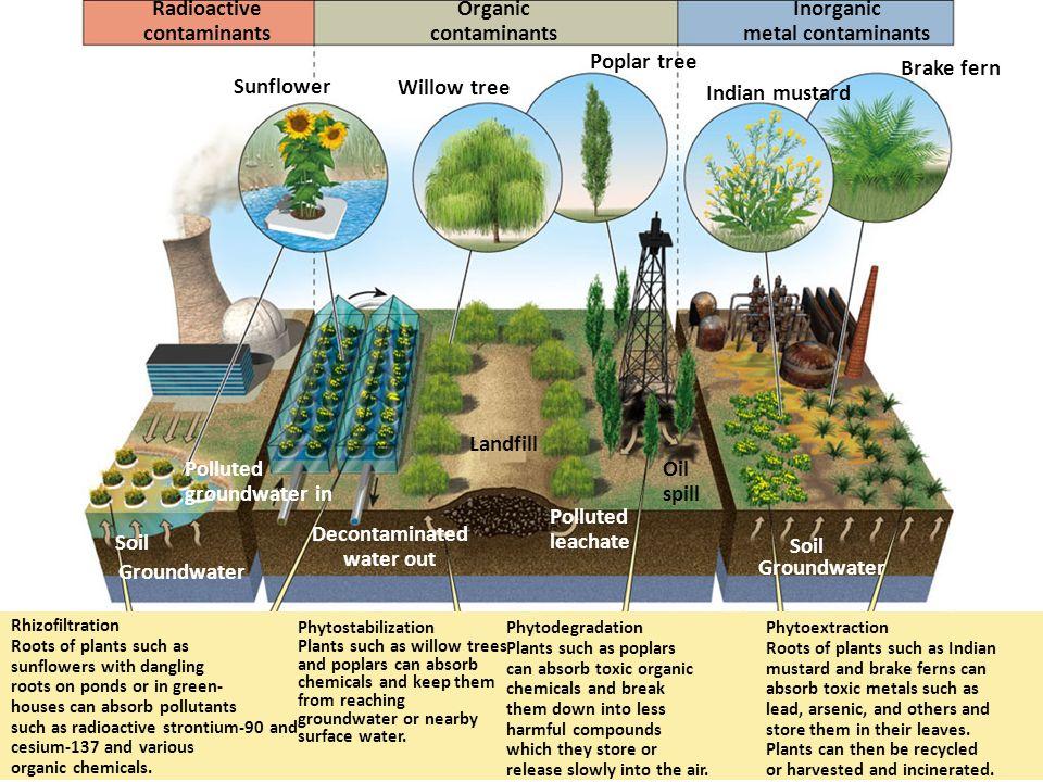 Radioactive contaminants Organic contaminants Inorganic