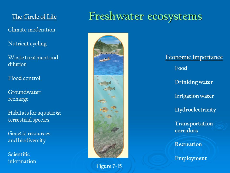 nutrient cycling in aquatic ecosystems In flowing-water ecosystems, the combined processes of nutrient cycling and downstream transport physical retention involves storage in wood detritus such as logs and snags, in debris caught in pools behind logs and boulders, in sediments, and in patches of aquatic vegetation.